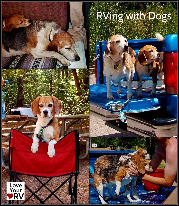 Anne and I have traveled many times with our two beagles along with us, Oscar a 45 lb. male and Angie a much smaller 20 lb. female.  It is one of the reasons we decided to see North America in an RV. We desired to embark on a one year trip and couldn't imagine leaving our beloved pets at home.  http://www.loveyourrv.com/rving-with-dogs/ #RV #RVing #Dogs