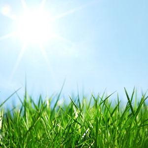 Fresh Cut Grass Fragrance Oil