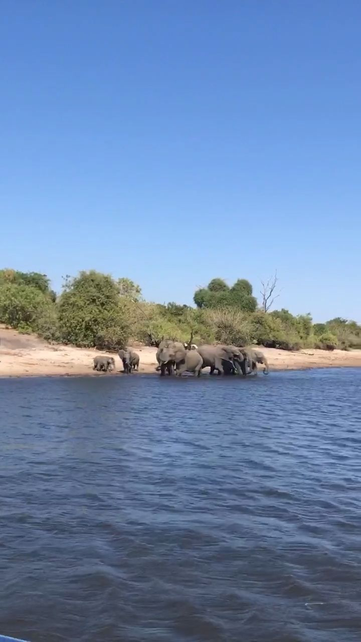 Chobe, Botswana Safari River Cruise!
