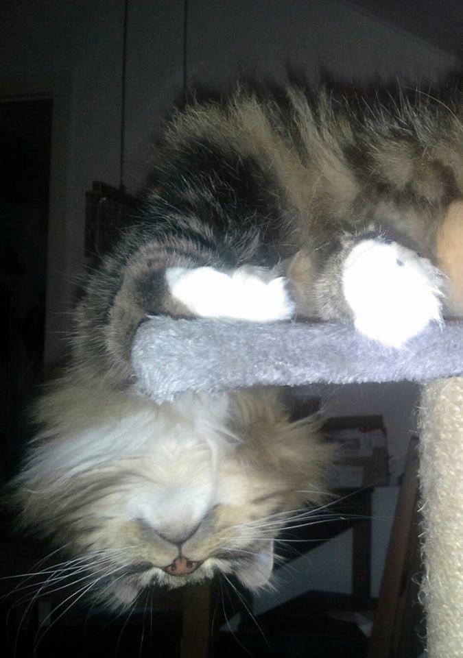 Ella sleeping upside down <3