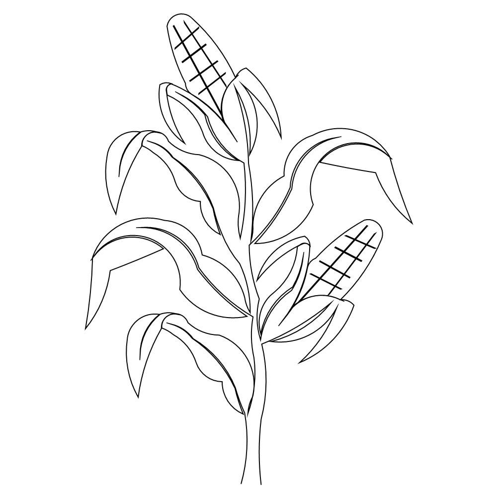Corn clipart for carved sign Drawings, Corn drawing