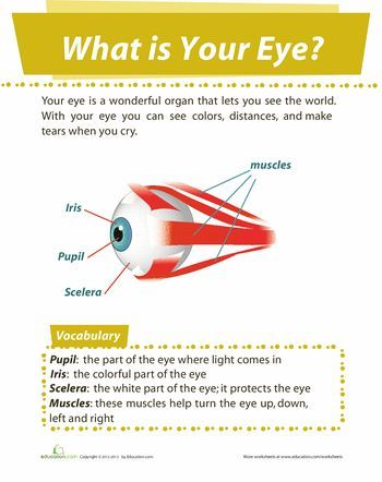 eye diagram preschool pinterest diagram worksheets and rh pinterest com