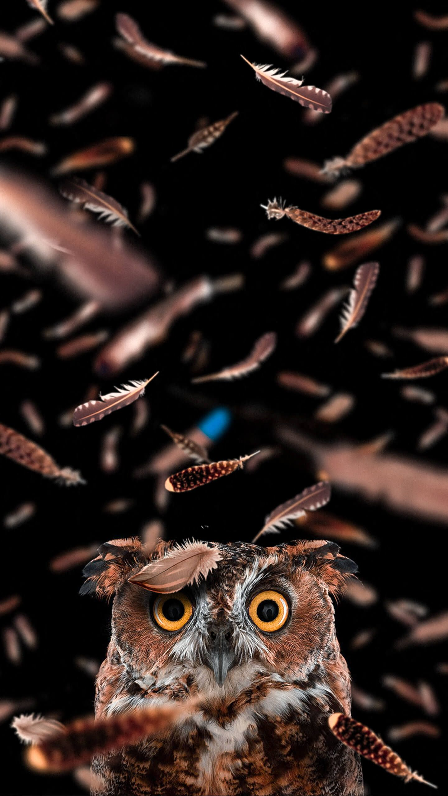 Curious owl (credits to alexandr bally) Owl wallpaper