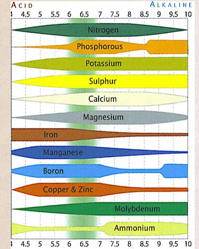 Ph Scale  Plant Nutrition    Ph And Plants