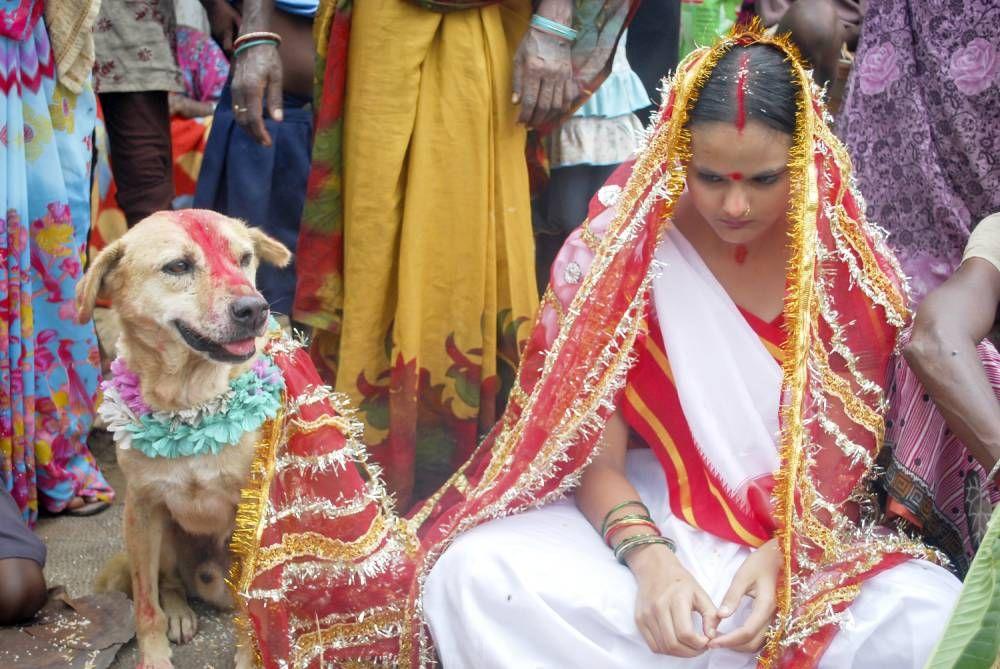 परंपरानुसार यंहा बचपन में कुत्ते के बच्चे से होती है शादी , अगर नहीं की तो होंगे ये घातक परिणाम | हिन्दीबाज