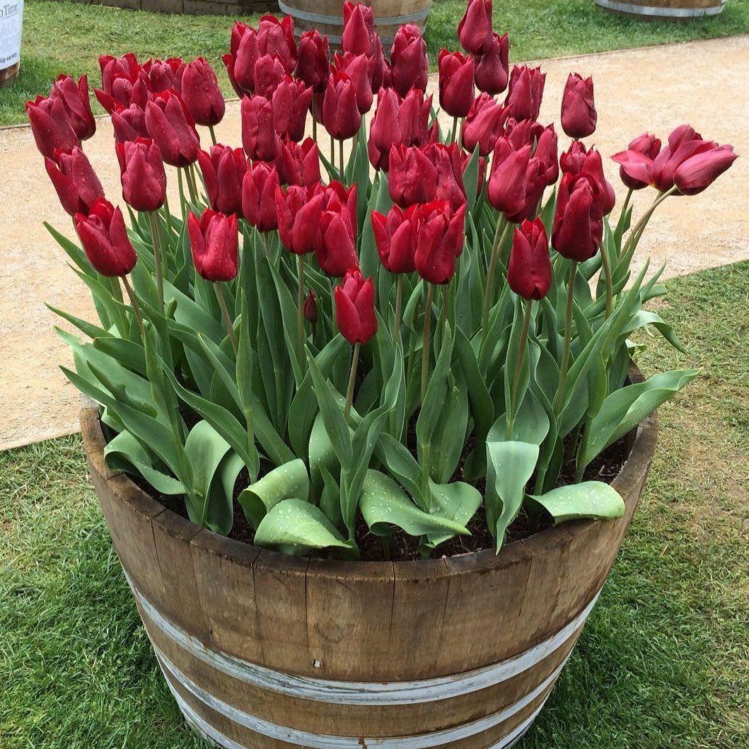 Como Sembrar Flores En Mi Jardin