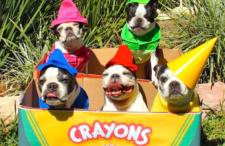 what an adorable dog halloween costume idea a box of crayons - Pet Halloween Photo Contest