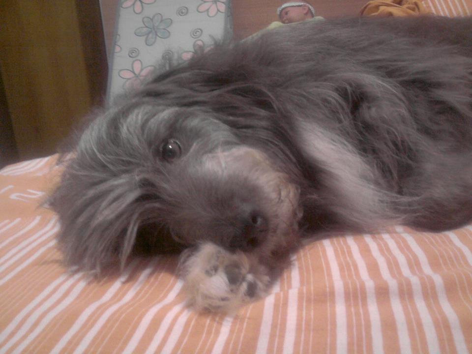 My dog, Duke...so cute!