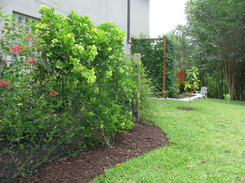 Green Facades Rainwater Harvesting And Recycled Concrete Retaining Wall Sustainable Landscaping Concrete Retaining Walls Green Facade