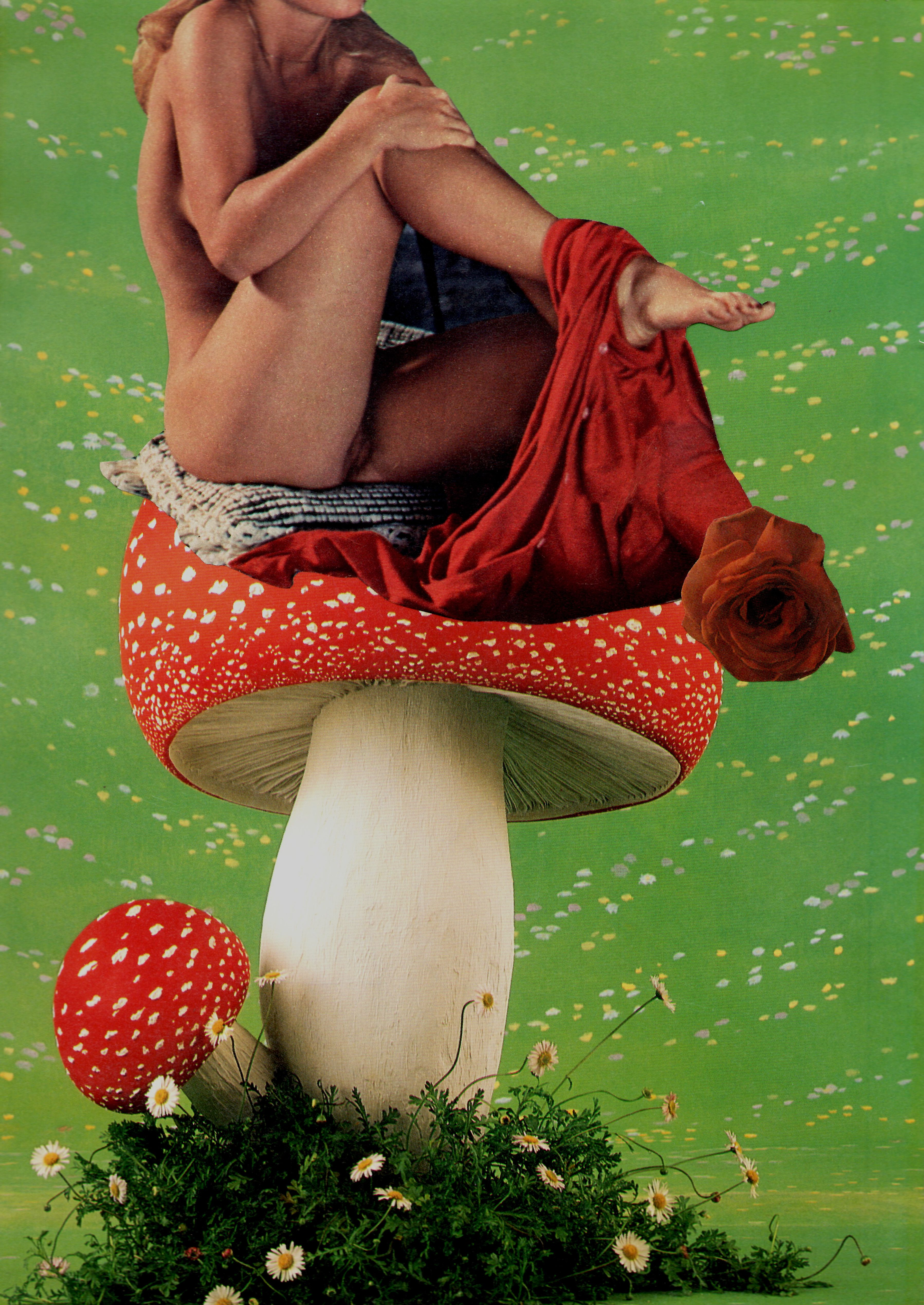 Sex mushroom