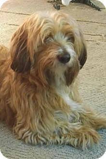 Williamsburg Ia Dachshund Maltese Mix Meet Teddy A Dog For Adoption Dachshund Mix Dog Adoption Kitten Adoption