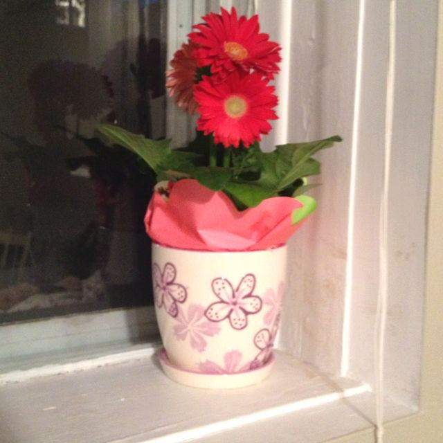 gerbera daisies for 2 reasons :) 1) to make me smile 2) because they will look Perfect on my windowsill