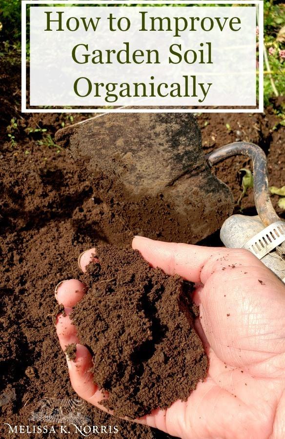 How To Improve Soil For Gardening Soil Improvement Garden Soil Soil