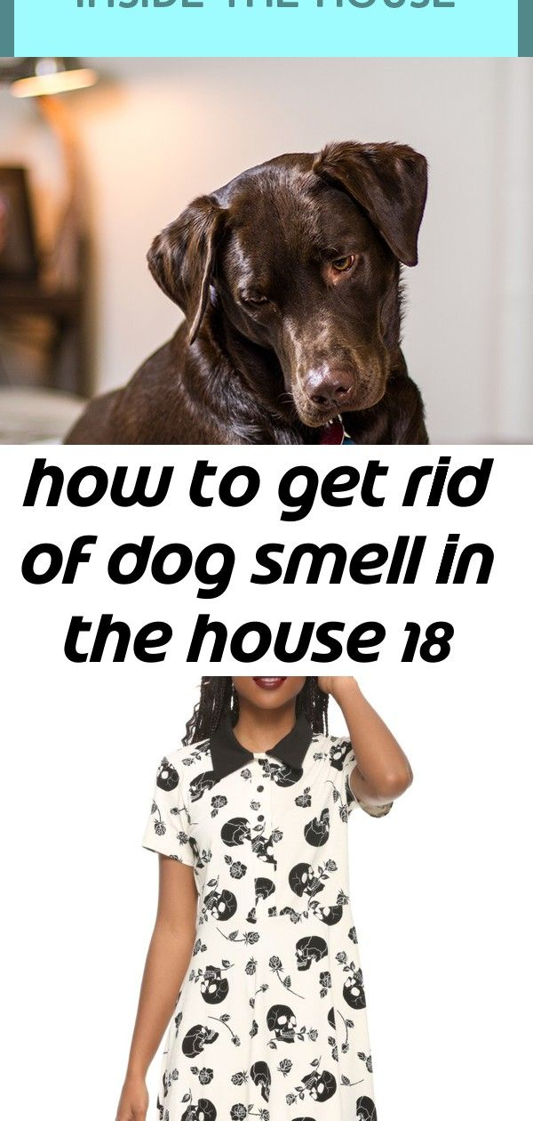 How To Get Rid Of Dog Odor Whether Your House Smells Like Dog Pee
