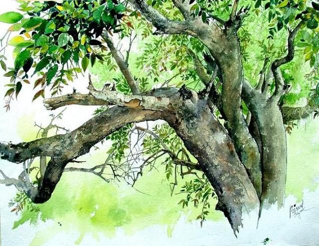 Indian Watercolor Paintings Watercolor Trees Watercolor Paintings