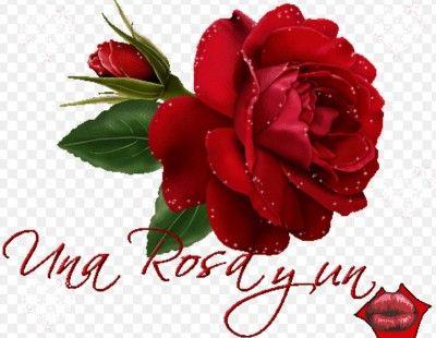 Una Flor Para La Mujer Mas Hermosa Flores