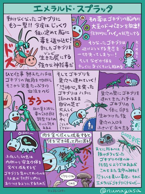 ぬまがさワタリ On Twitter 動物 図鑑 珍しい動物 生き物 イラスト