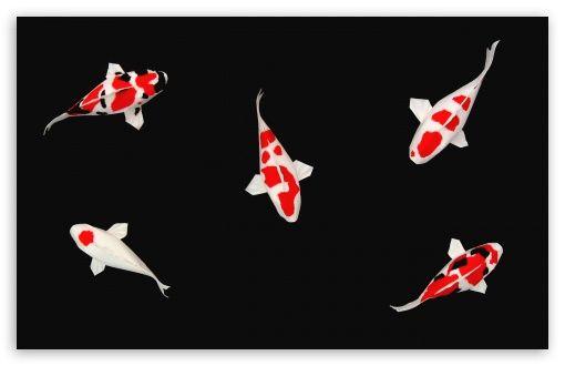 Download Koi Fish Hd Wallpaper Koi Wallpaper Fish Wallpaper Wallpaper