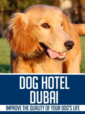 Dog Hotels Are Of Great Help To Many Working Individuals They Can