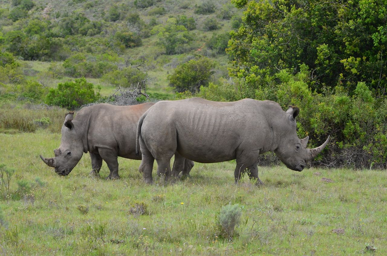A Crush Of Rhinoceroses South Africa Bonthego Photo Photo Animals Animal 2