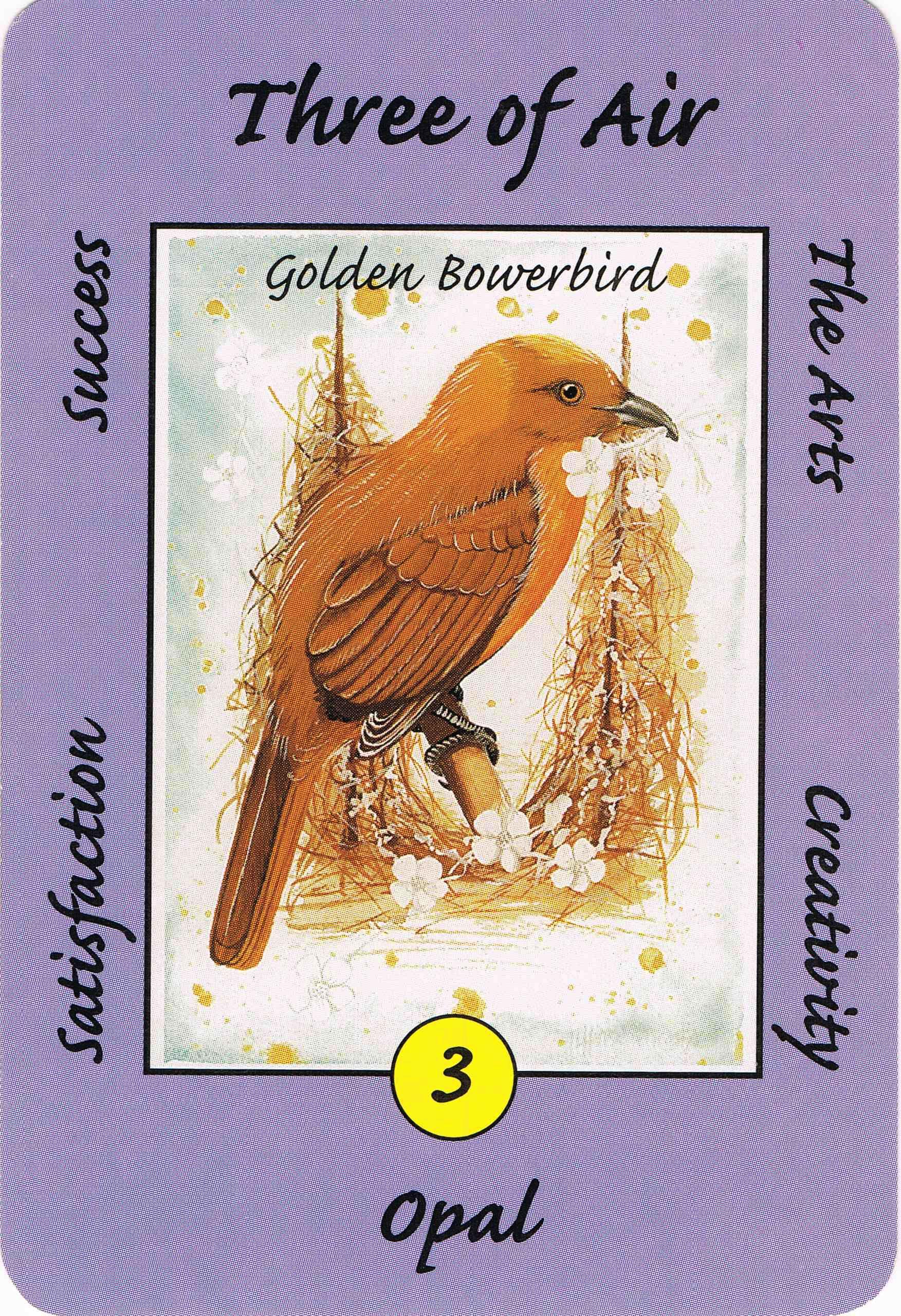 3 air bowerbird australian animal tarot deck work