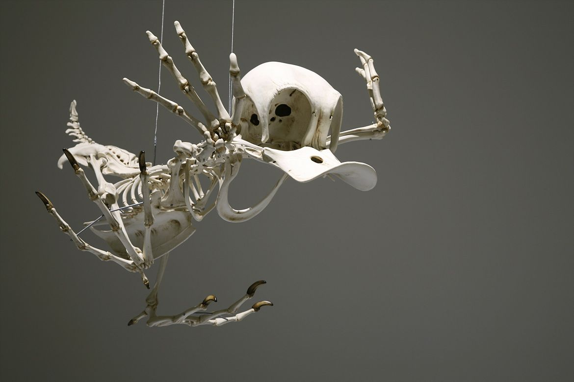 This Is What The Skeletons Of Famous Cartoon Characters
