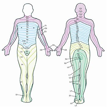 Lower Back Nerve Chart Lumbar Low Back Spinal Nerves Health