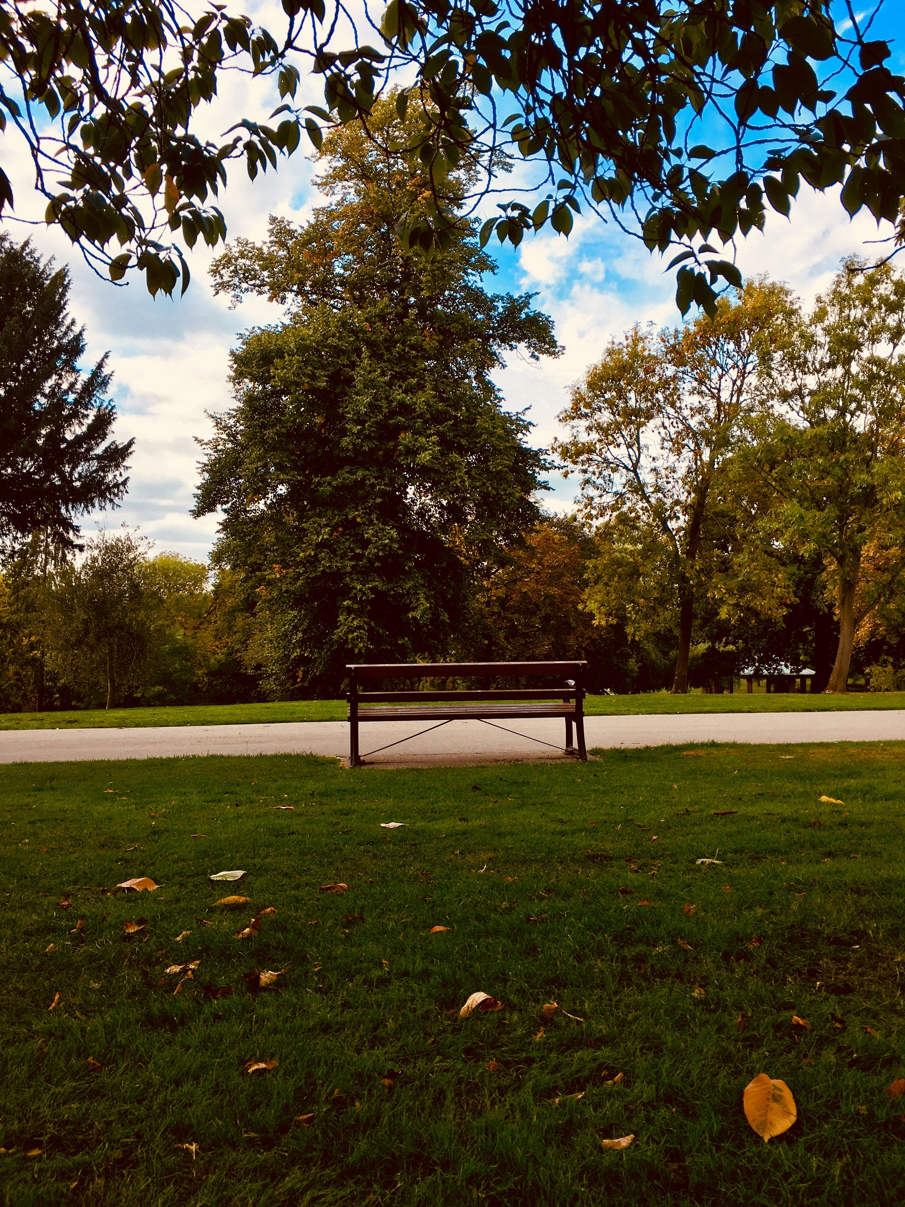 Aesthetic Park Background : aesthetic, background, Bench, Outdoor, Park,, Green, Aesthetic,