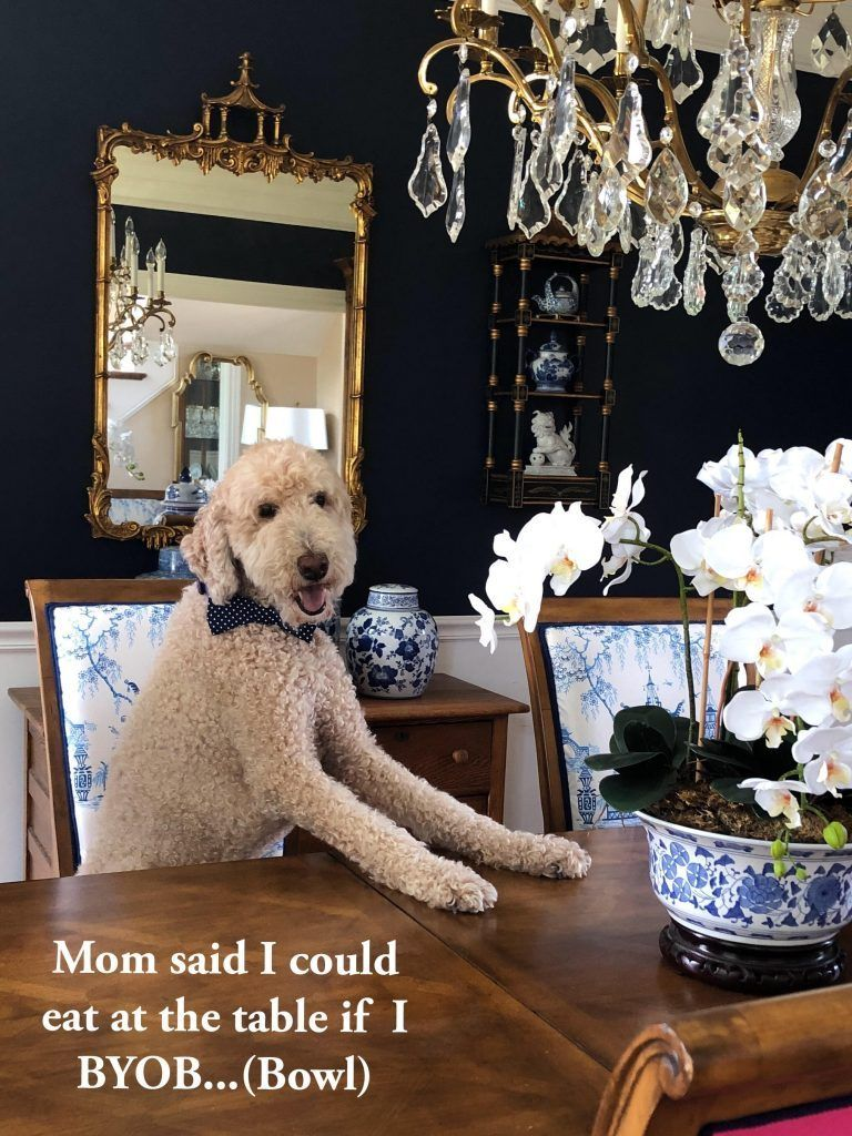 A Hiccup And Reset For The Pet Love Contest Enchanted Home Pets Animals And Pets