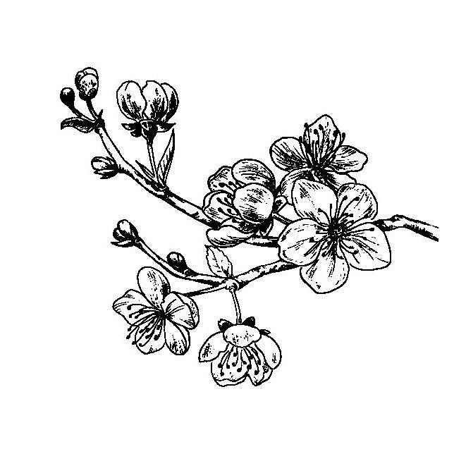 flor de cerezo para pintar | Spring | Pinterest | Cerezo, Pintar y Flor