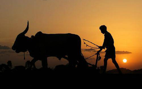 An Indian farmer in a field silhouette. Village