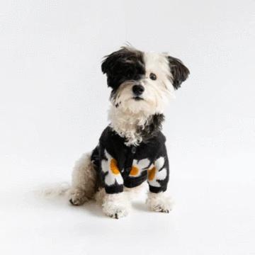 Daisy Cardigan Black In 2020 Cardigan Black Cardigan Pet Boutique