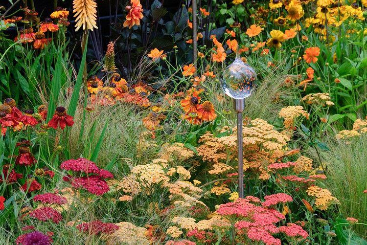 Achilea, Helenium, Kniphofia, Dahlia, ornamental grass