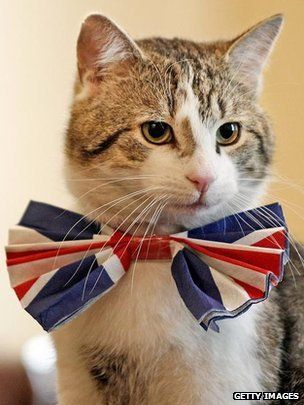 Larry the cat who lives at number 10 Downing Street