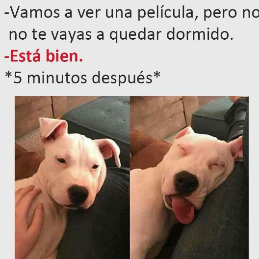 Comicas Funny Dog Memes Funny Animal Memes Funny Dogs
