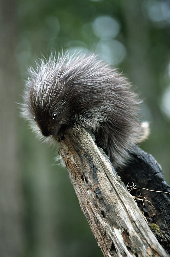 15 Delightful Animals That Actually Exist