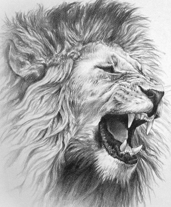 Pin By James Lillich On Ink Lion Tattoo Design Lion Drawing Lion