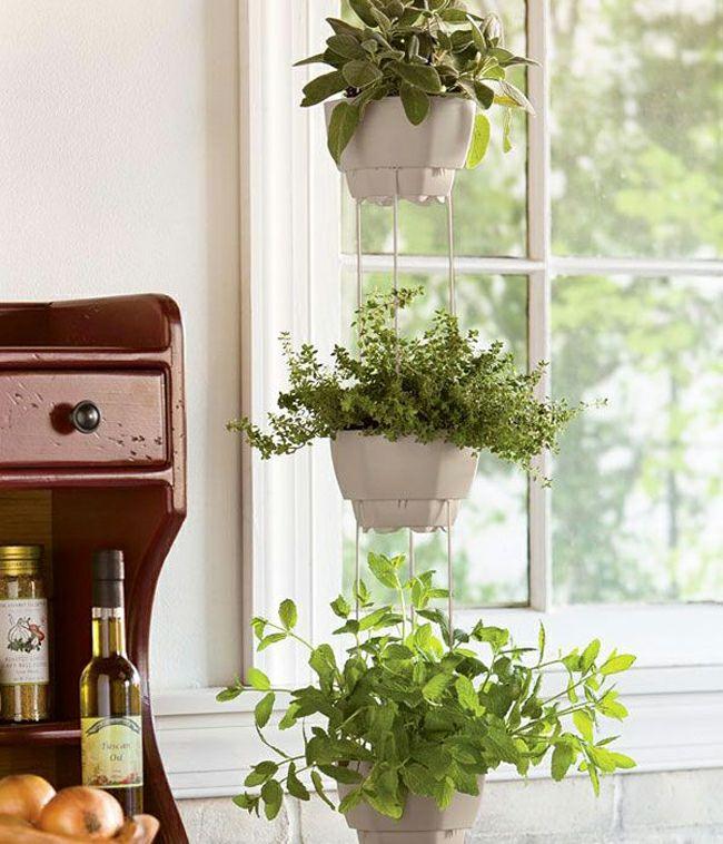 mini jardini res et pots d int rieur aux herbes aromatiques herbes aromatiques herbe et pots. Black Bedroom Furniture Sets. Home Design Ideas