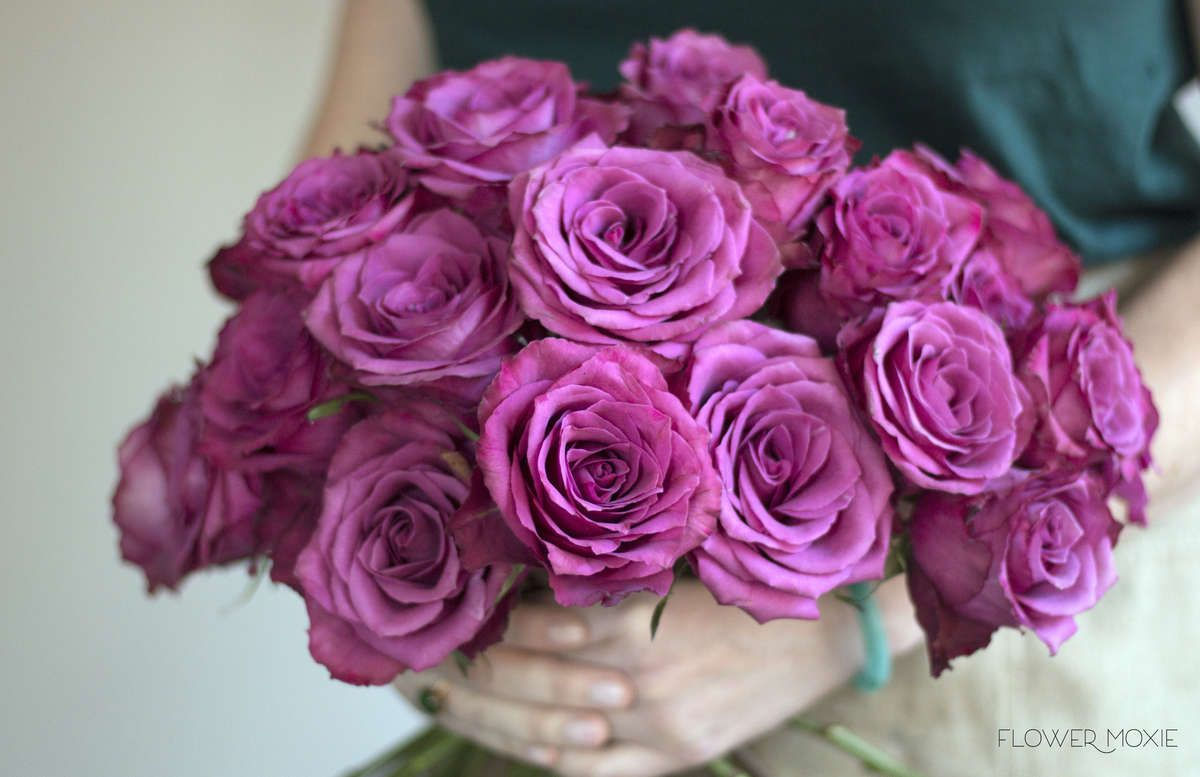 Blueberry Roses | Standard roses, Craft wedding and Bouquet flowers