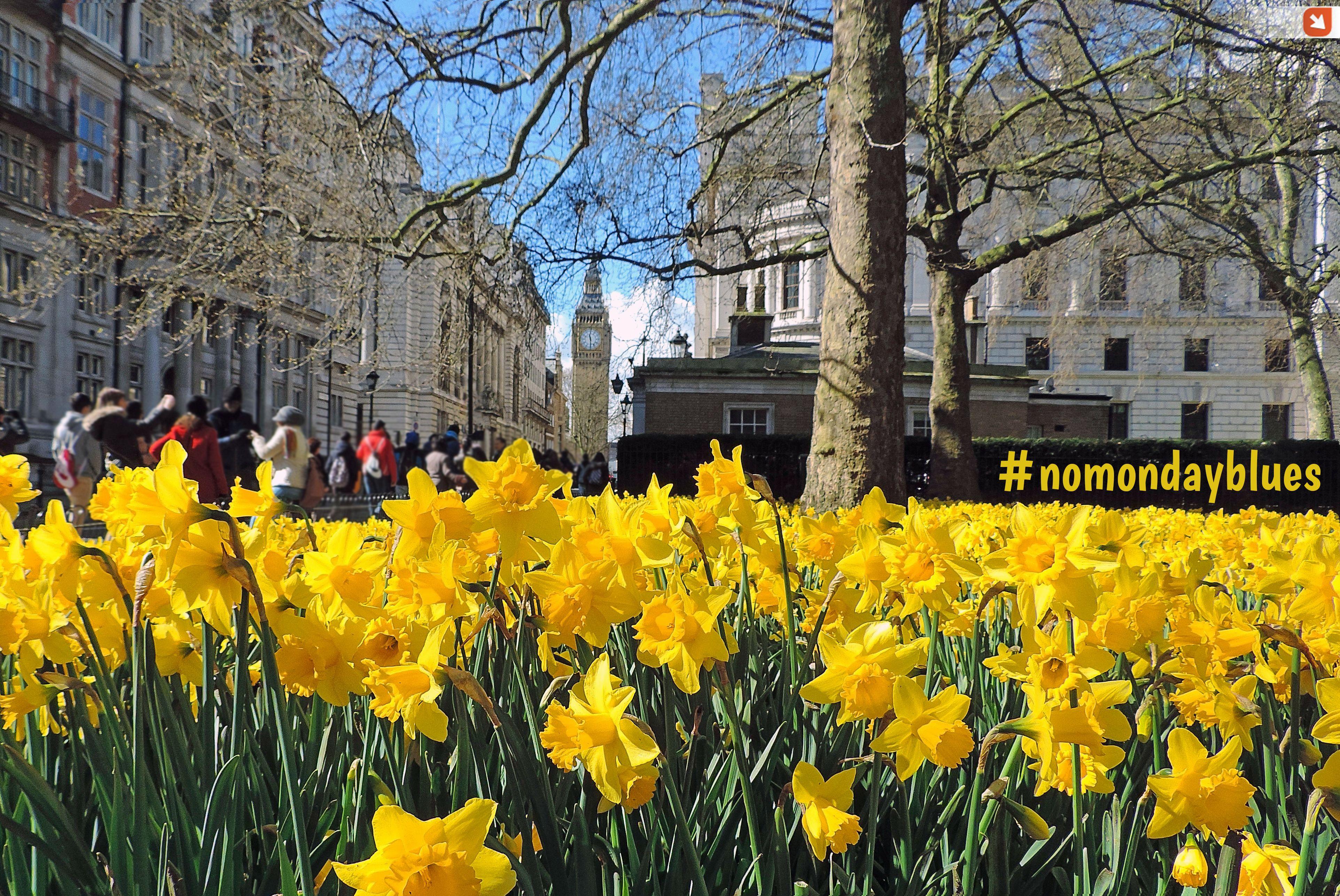 Who would like to take a trip to #London to fight against Mondays syndrome? #nomondayblues #mondayblues