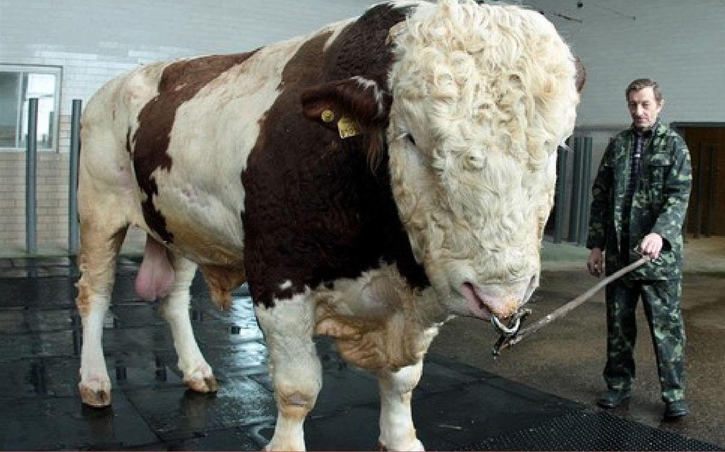 Conoce los animales más grandes de su especie - the ...