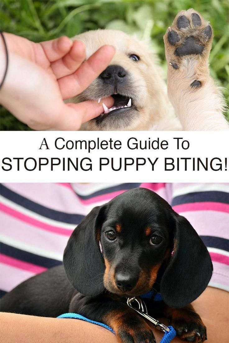 Get help with your biting puppy now. We look at why
