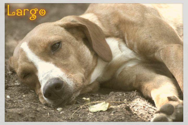 Largo Con Imagenes Perros En Adopcion Cachorros Perros