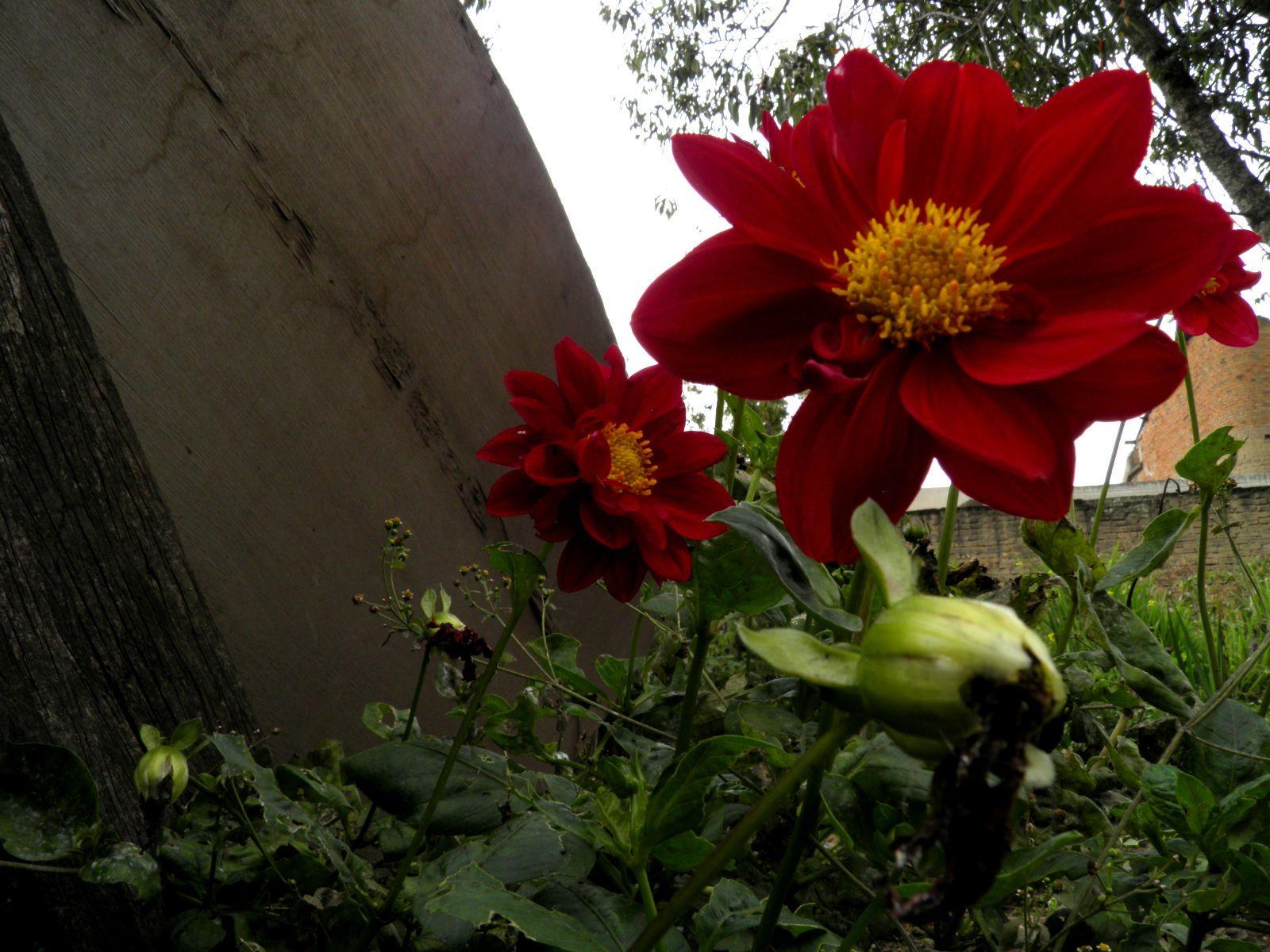 Flores pm pinterest