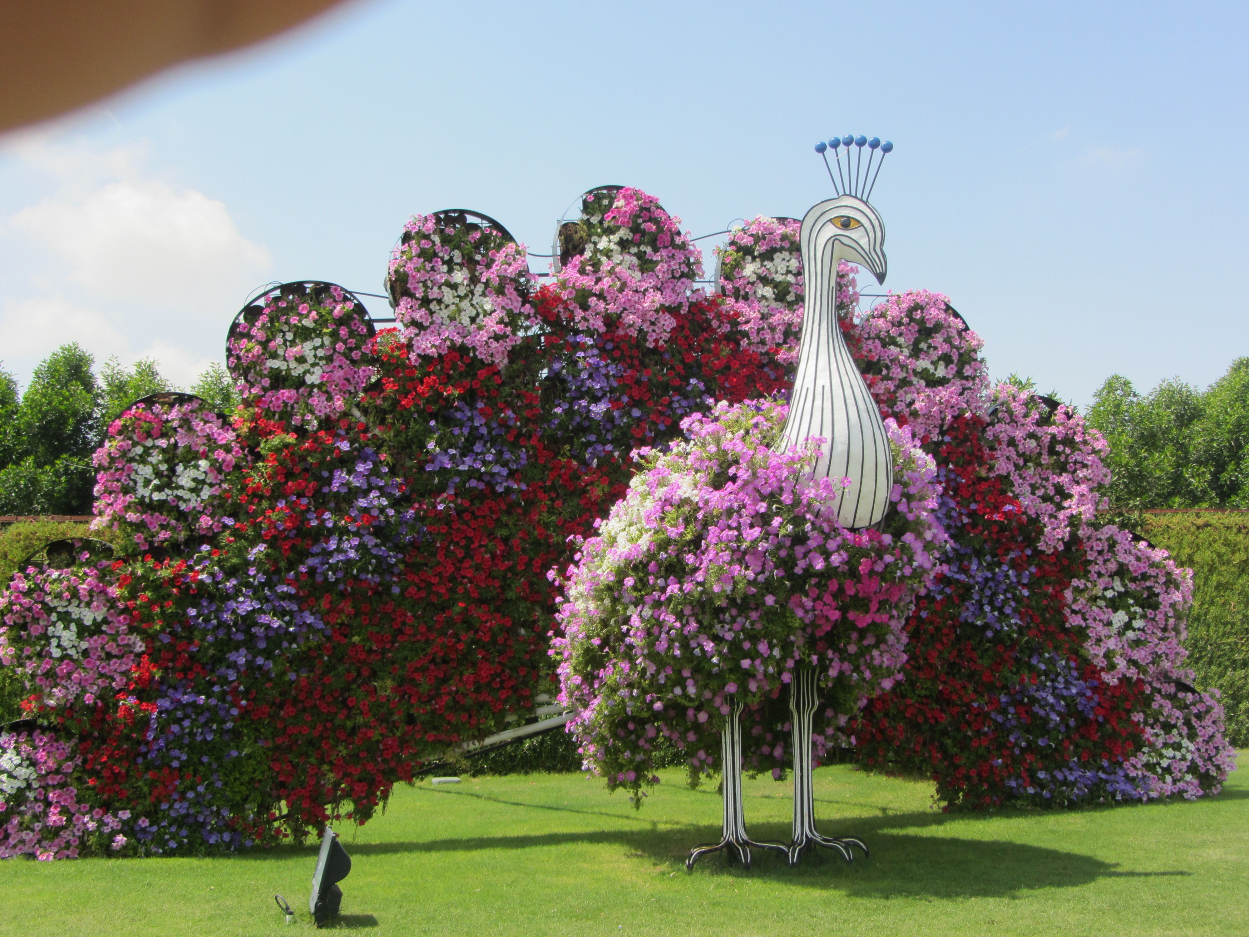Peacock made out of flowers at Miracle Garden, Dubai