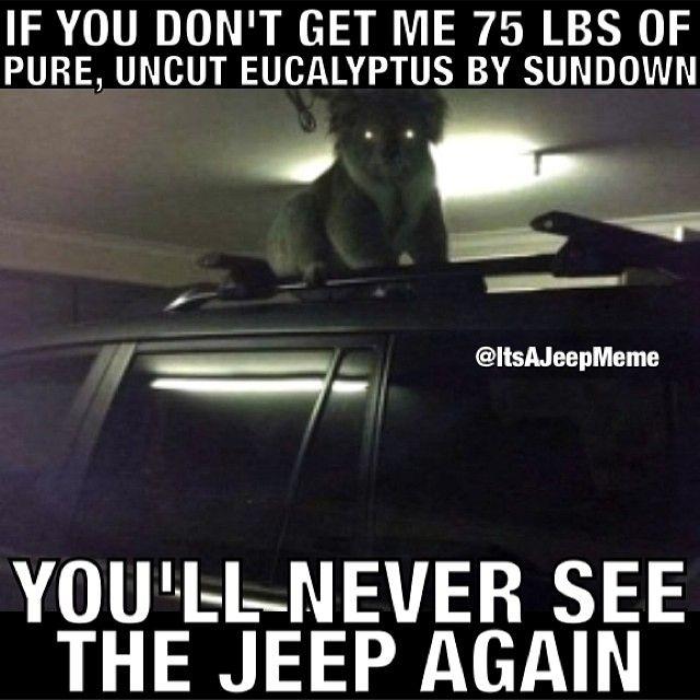 Funny Jeep Meme : Does this koalafy as a jeep meme padgram memes