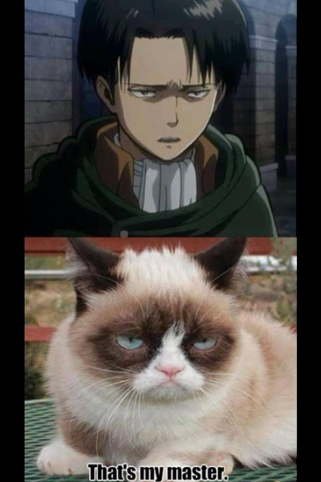 Pin by Leah Rose on Attack on Titan | Attack on titan ...