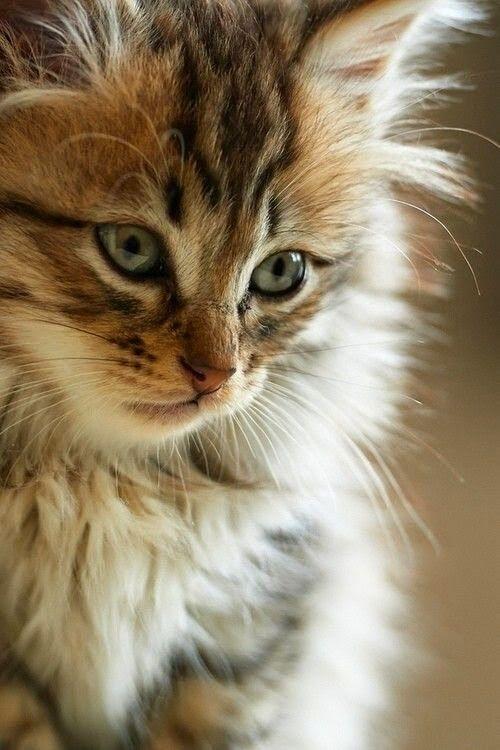 mooie kat