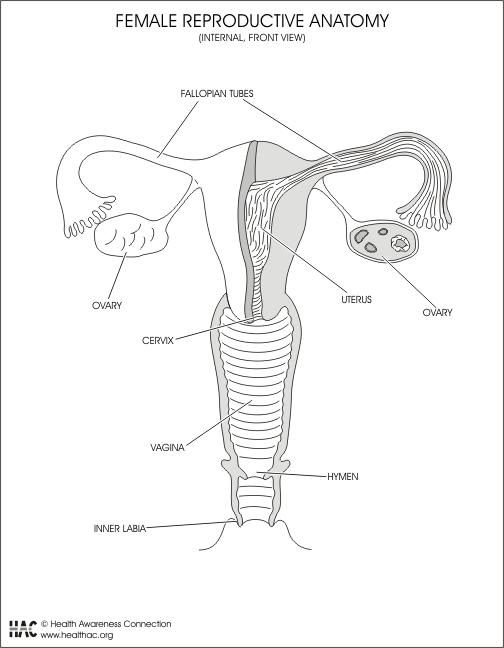 10 Caractersticas Del Aparato Reproductor Masculino Sistema Reproductor Masculino M Aparatos Del Cuerpo Humano Sistema Reproductor Sistemas Del Cuerpo Humano