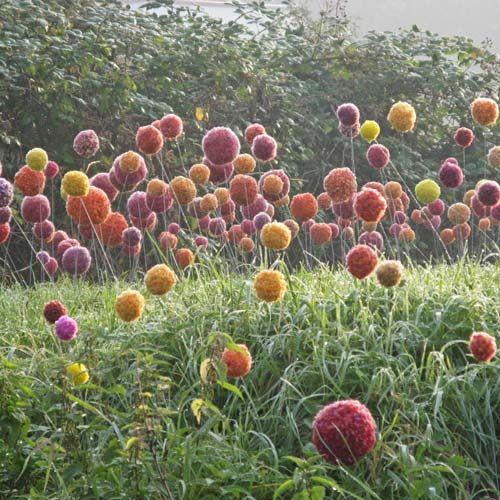 bloemen om te planten